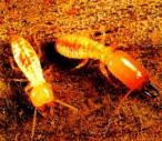 termits9